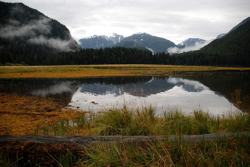 Great Bear Rainforest - Regenwald