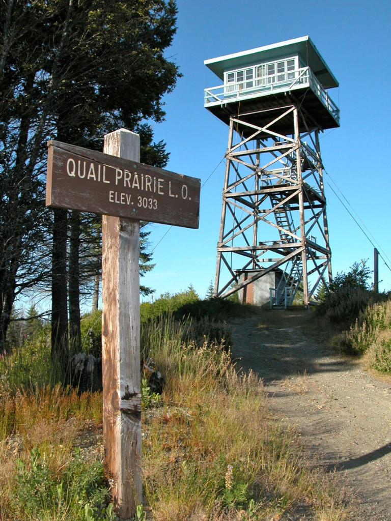 Quail-Prairie