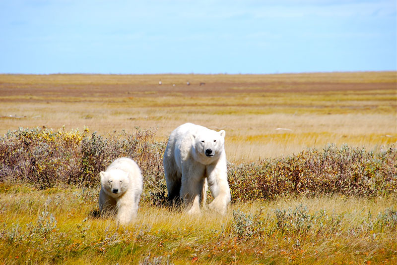 Hudson Bay, Manitoba - out-of-canada.olehelmhausen.de