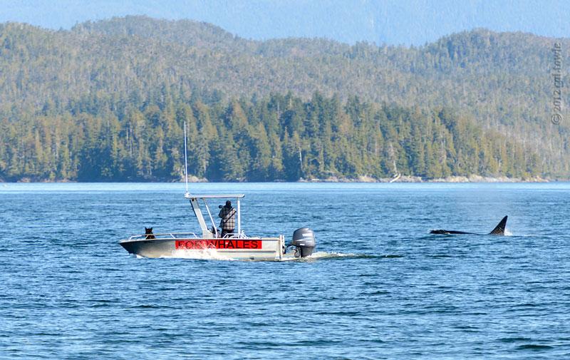 Walbeobachtung in Kanada - Cetacealab, British Columbia: Die den Walen lauschen - out-of-canada.olehelmhausen.de - 5