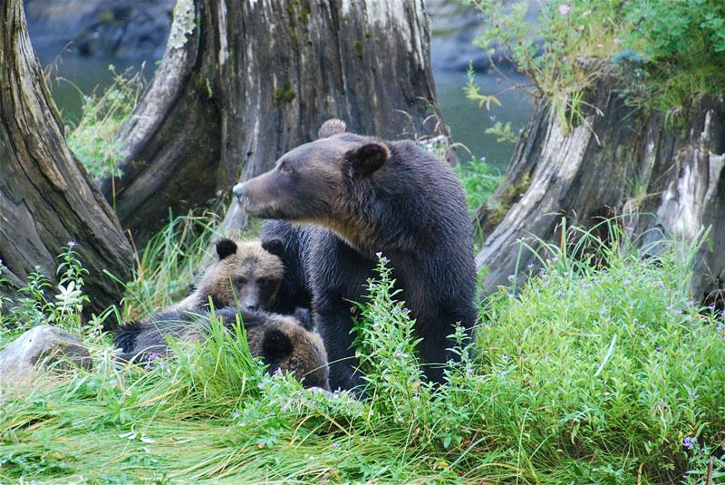 Grizzlymama